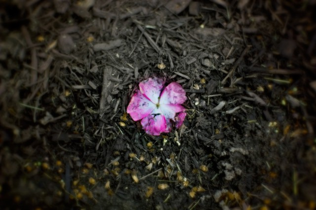 a flower on the ground