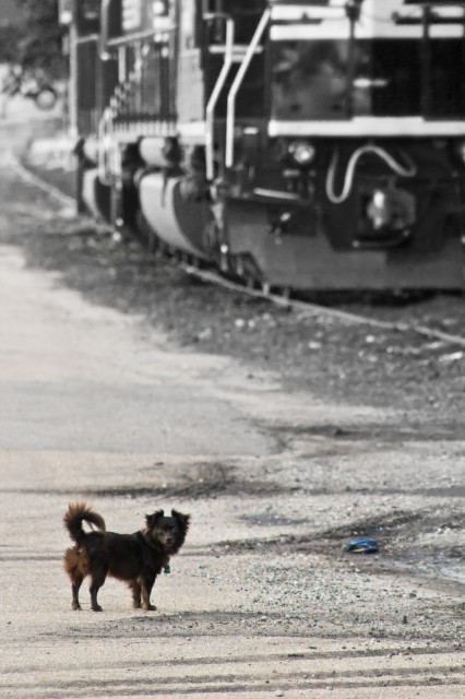 roddy by a train engine