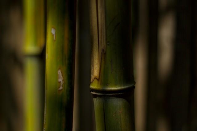 bamboo bamoozle
