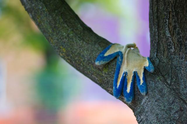 a glove on a tree