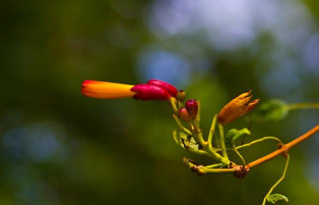 funky flower bird of paradise